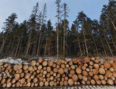 Леса ущерб