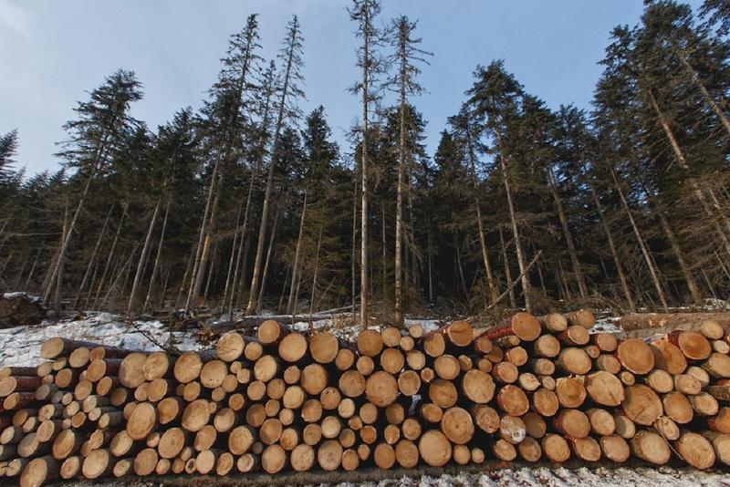 Нанесённый лесам ущерб должен быть возмещён