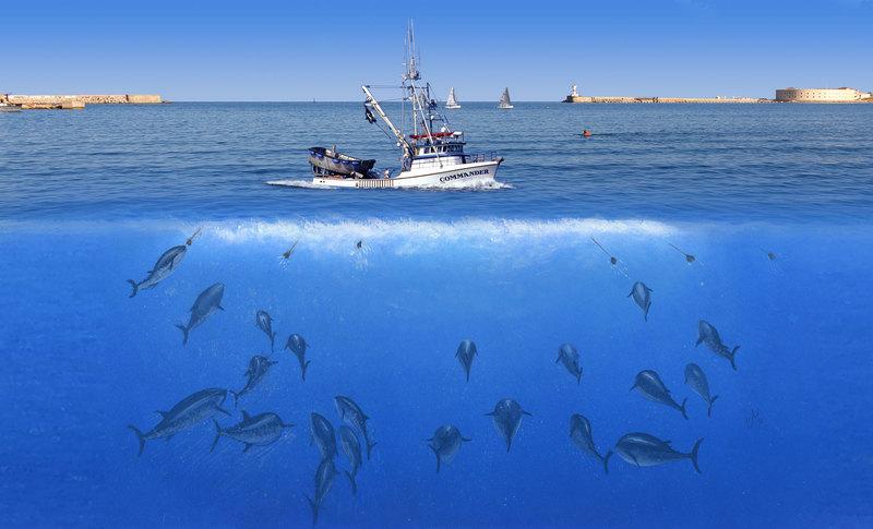 Крым рыба