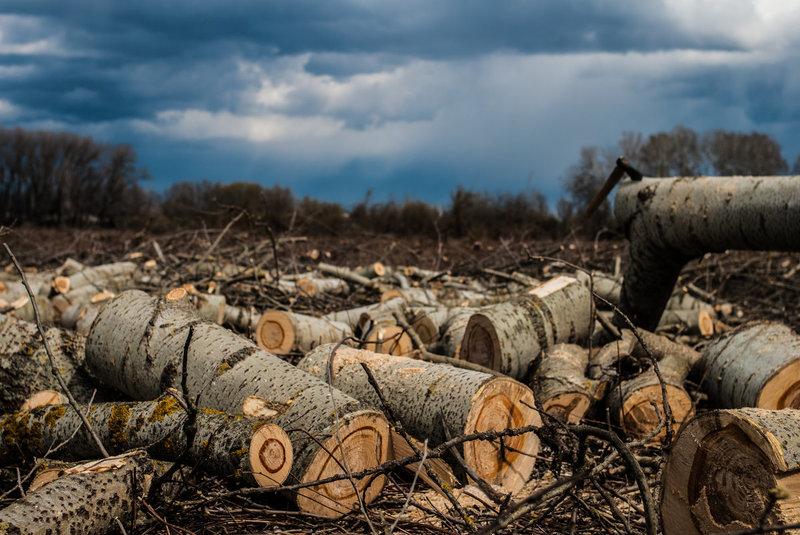 Борьба с «теневым рынком» продажи леса
