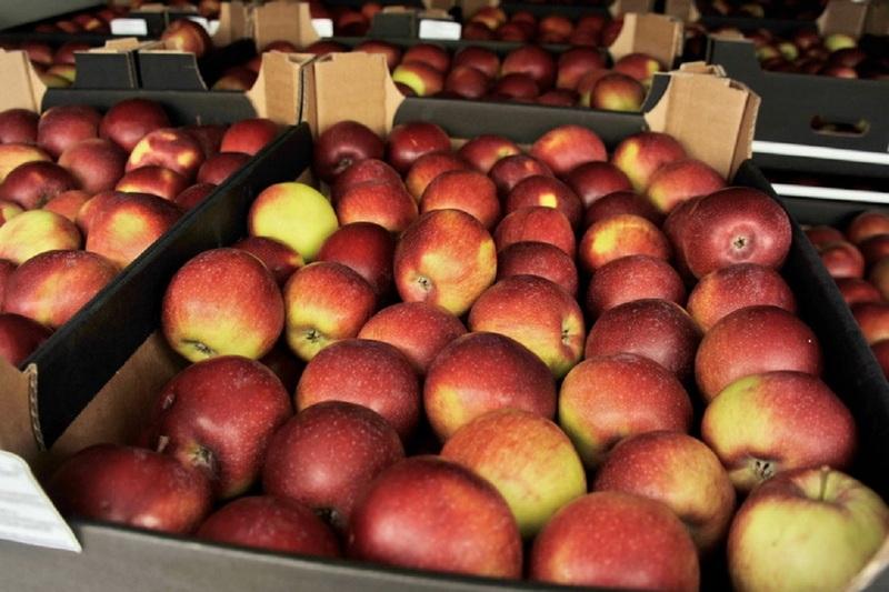 Фуры яблок