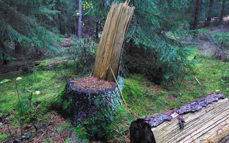 Министр лесного комплекса Иркутской области ответит за незаконную вырубку леса