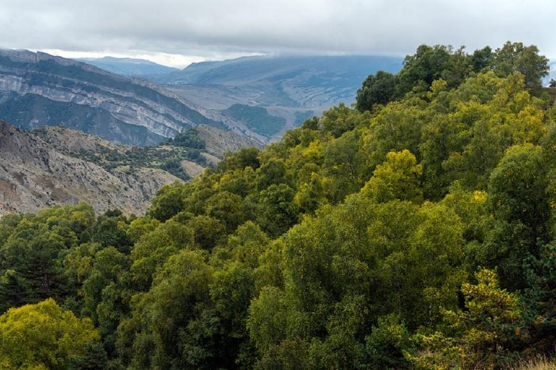 Главу лесного хозяйства Дагестана будут судить
