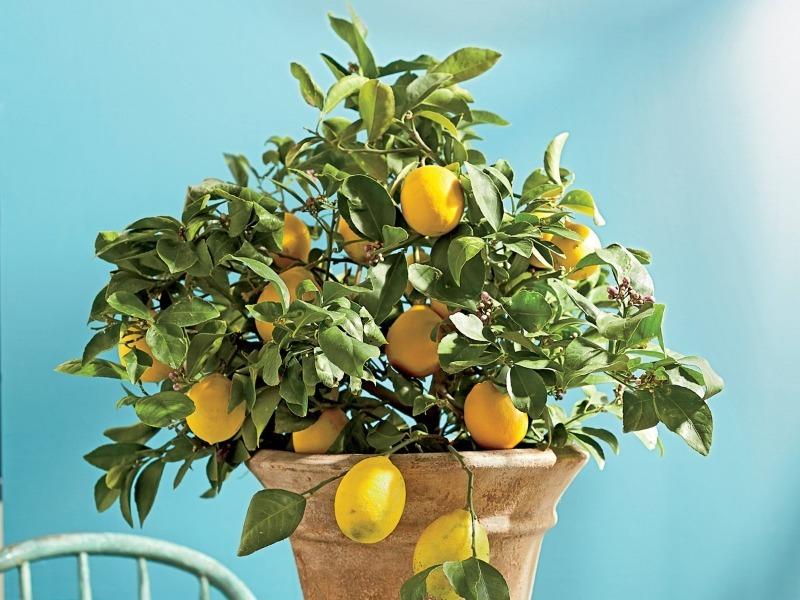 Домашние растения, которые помогут привлечь деньги и удачу