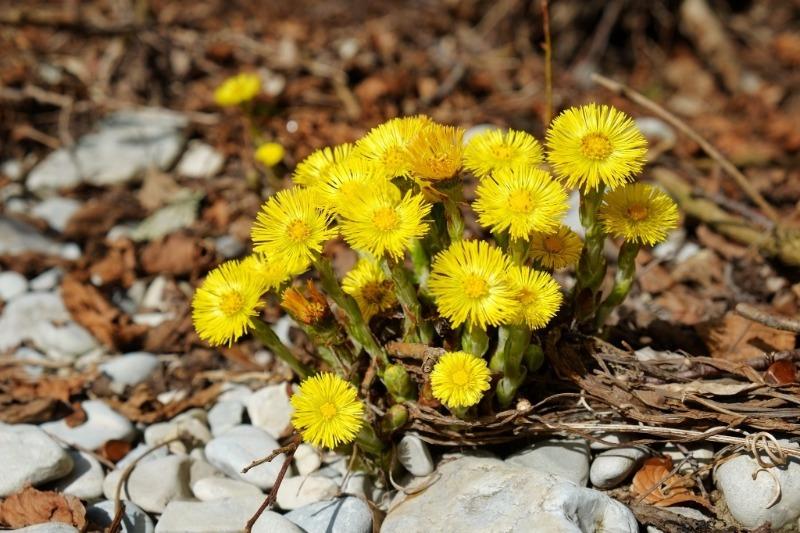 Не только долларовое дерево: 6 растений, которые привлекают в дом благополучие